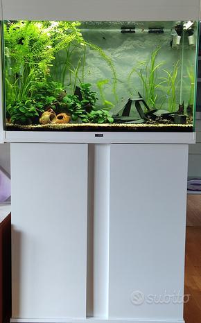 Acquario Pesci piante Tecnica e altro