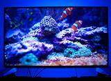 "Panasonic VIERA TX-49EX603E 49"" 4K Smart TV"